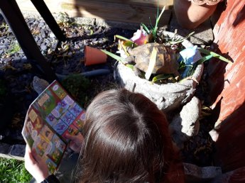 Olivia and Tortoise